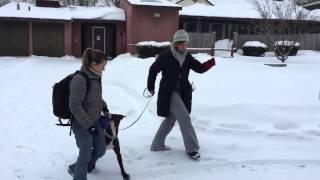 Training Shelter Dogs - Jester And Loose Leash Walking