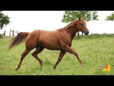 Cursos a Distância Inseminação Artificial em Equinos - O Garanhão como Doador de Sêmen