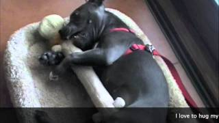 Puppies 101-cuter Than Cute Puppy - Bella The Staffy Pup