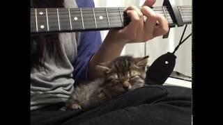 Tiny Foster Kitten Loves Listening to Music (guitar)