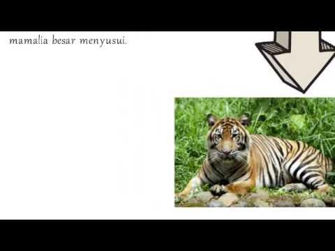 Persebaran Flora Dan Fauna Di Indonesia #GeoUnsil