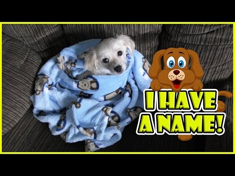 OUR PUPPY HAS A NAME! | We Are The Davises