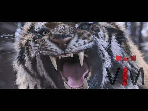 The Tiger: An Old Hunter's Tale -  Music Video