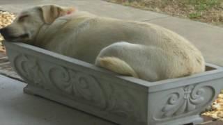 Смешные собаки спят в странных позах компиляции