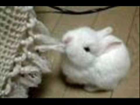 Bunny1474 By Conejitos By Bunnies Bunny1474 Bunny1474 Bunnies Conejitos Bunnies Conejitos Bunnies By Conejitos 8n0OPXNwk