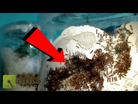Thumbnail: Fire Ant Update: OMG! WHAT IS THAT?!