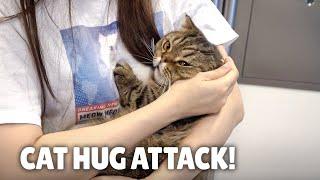 ¿Cuánto tiempo puedo estar abrazando a mis gatos?| Kittisaurus