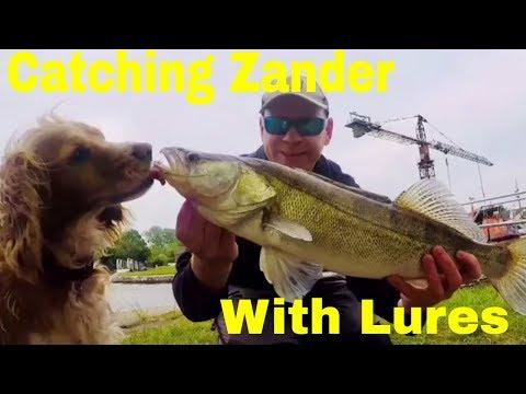 Zander Fishing With Lures- PB Big Fish Landed.