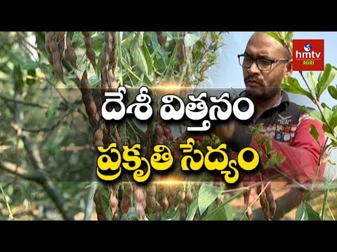 Young Farmer Natural Farming with Desi Seeds | Suryapet | hmtv Agri