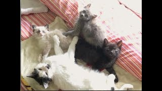 Everyone Gets Morning Pets & Bathing Disaster - #15 - Growling Kitten