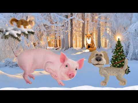 Новый 2019 год свиней, Боров, Хряк, Кабан, Свинья,Свиноматка, - Видео на ютубе