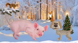 Новый 2019 год свиней, Боров, Хряк, Кабан, Свинья,Свиноматка,