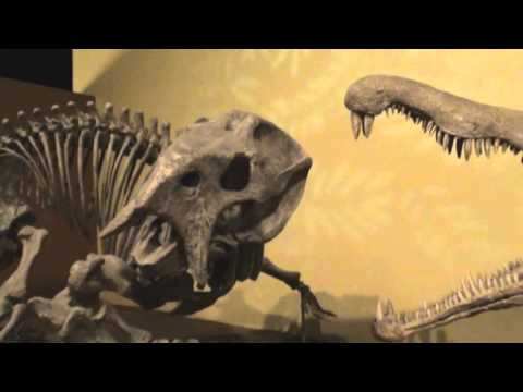 SVP 2015 Part 11: New Mexico Museum of Natural History