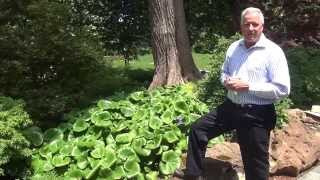 In the Garden with Dave Forehand: Bear