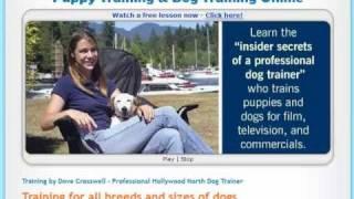 Dogs & Dog Training Explained - Easy Puppy Training