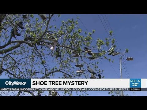 Mysterious shoe trees show up in Halton Hills