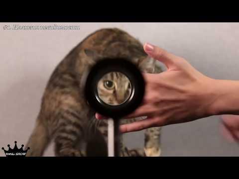 скрытая камера в школьном душе :: VideoLike