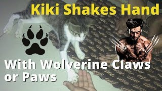 Cat (KiKi) Shakes Hand w/ Wolverine Claws or Paws   KatzVine #1   Funny Cat