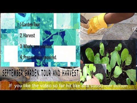 September Month Garden Tour & Harvest 2017.