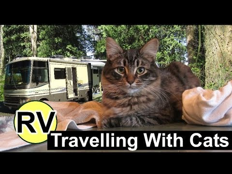 Cats Have Fun And Go Camping In Our RV