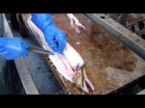 ウツボを捌く 漁師風魚調理 和歌山 釣太郎