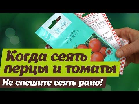 Сроки посева семян.  Когда сеять перцы и помидоры на рассаду | секретов | светлана | помидоры | налетова | рассаду | посева | перцев | огород | сроки | сеять