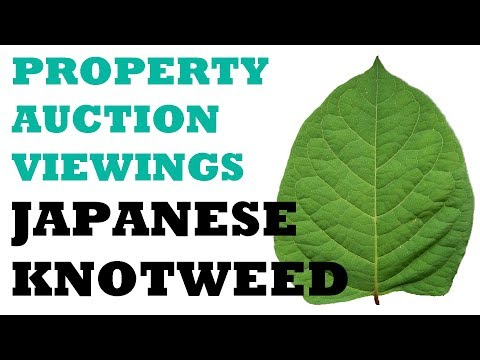 Japanese Knotweed; identifying it on a property auction viewing.