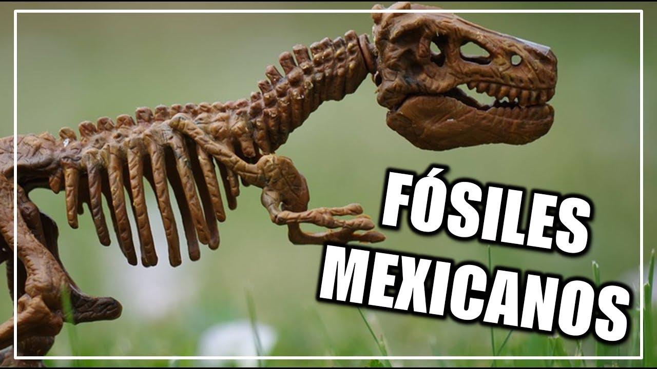 Que Fosiles Han Sido Encontrados En Mexico Ciencia A La Mexicana Youtube Los fósiles de dinosaurio descubiertos en méxico tienen una antigüedad que va de 199.6 millones de en cambio la mayoría de fósiles de dinosaurio mexicanos datan del cretácico tardío, con una. que fosiles han sido encontrados en mexico ciencia a la mexicana