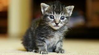 Kitten VS. Butt