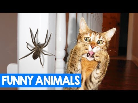 Funny Pets & Zoo Animal Reactions   Cats & Dogs + Other Animals Moments 2018
