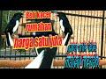 Beli Kacer Rumahan Satu Juta Serasa Burung Harga  Juta  Mp3 - Mp4 Download