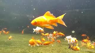 wahhh ikanya lucu-lucu, yukk kita menyelam sambil lihat ikan- ikan yang imut..