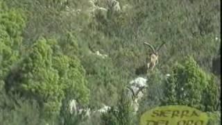Caccia Grossa Spagna/Grand Gibier Espagne. Sierra del Oro