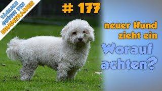 Ein neuer Hund zieht ein  Was ist nach dem Kauf/nach der Adoption besonders zu beachten?  TGH 177