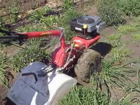 Φρεζάρισμα Καλλιέργειας Φασκόμηλου