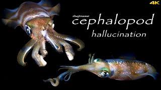 CEPHALOPOD HALLUCINATION | Alien Intelligence 4K