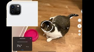 Measuring My Cat with 2020 iPad Pro's LiDAR Scanner