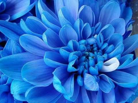 Beautiful Blue Flowers In The World See How Amazing Wonderful This