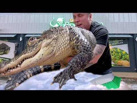 Giving My Huge Pet Alligator A Bath!!  Brian Barczyk