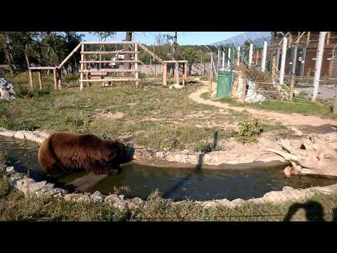 Под Житомиром в зоопарке живут три медведя