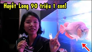 Được Bà Xã dẫn đi mua cá HUYẾT LONG tại tiệm cá RỒNG nổi tiếng ở Sài Gòn!