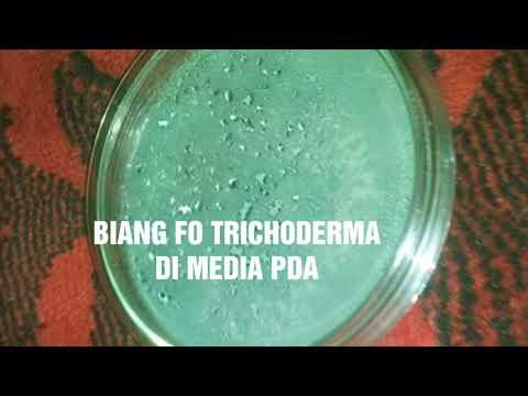 Biang F0 TRICHODERMA Media PDA
