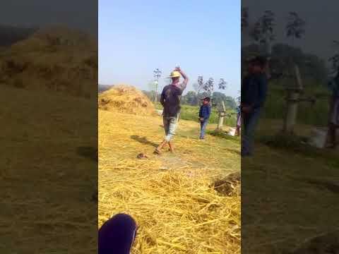 Mau Alipur Holi