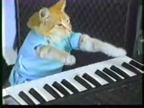 Football spike keyboard cat