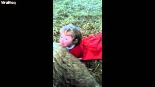 drie jaar oud meisje helpt bij de geboorte van een lam onder toezicht van haar moeder natuurlijk