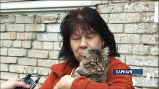 Жители поселка Южного бьют тревогу: кто-то мучает и убивает кошек
