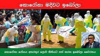 කොරෝනා රෝගය අතරතුර හිස ඔසවන ඉබෝලා වෛරසය   Ebola Outbreak in Africa