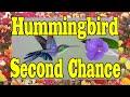 Hummingbird Second Chance MUST SEE FEEL GOOD VIDEO !!!! ORIGINAL