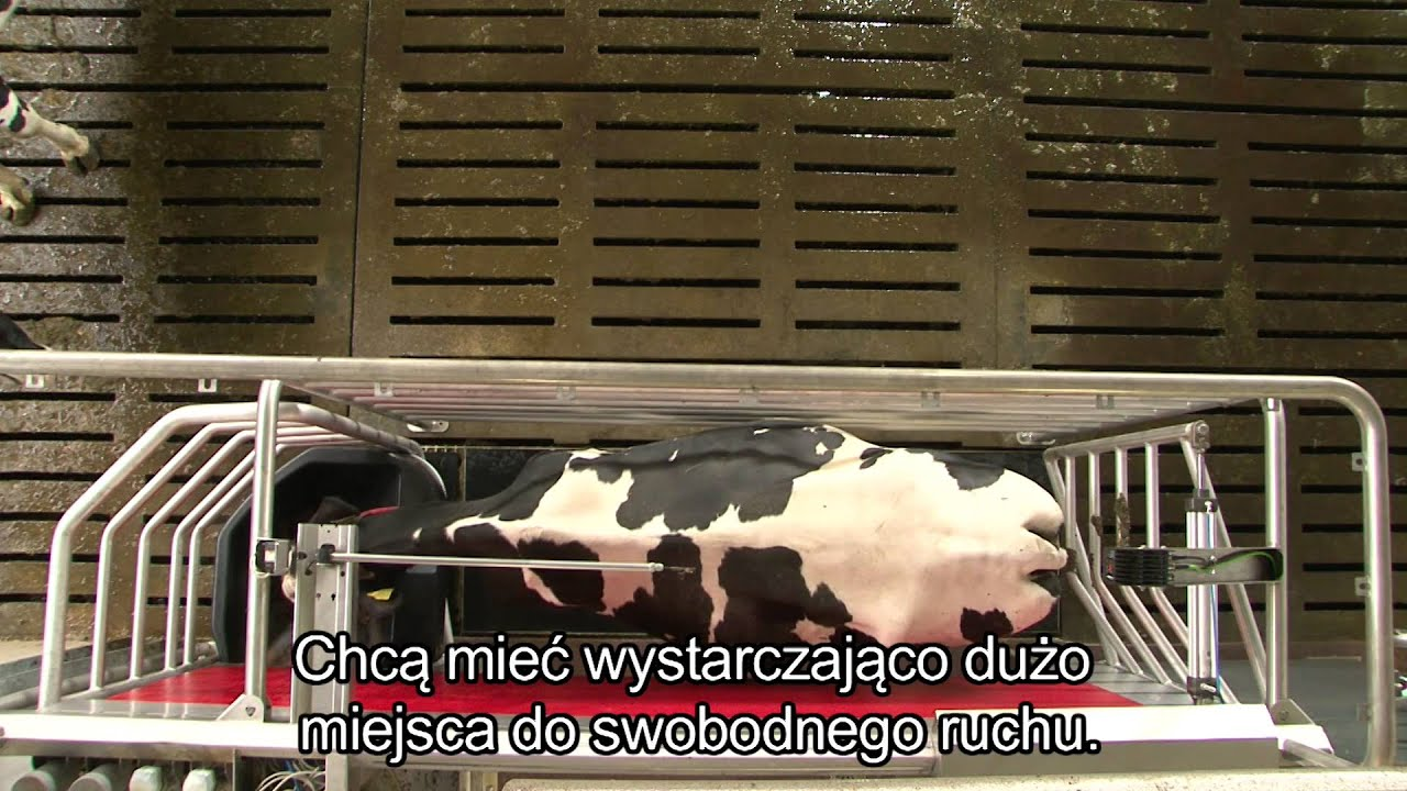 Lely Astronaut A4 - Benefits cow (Polish)