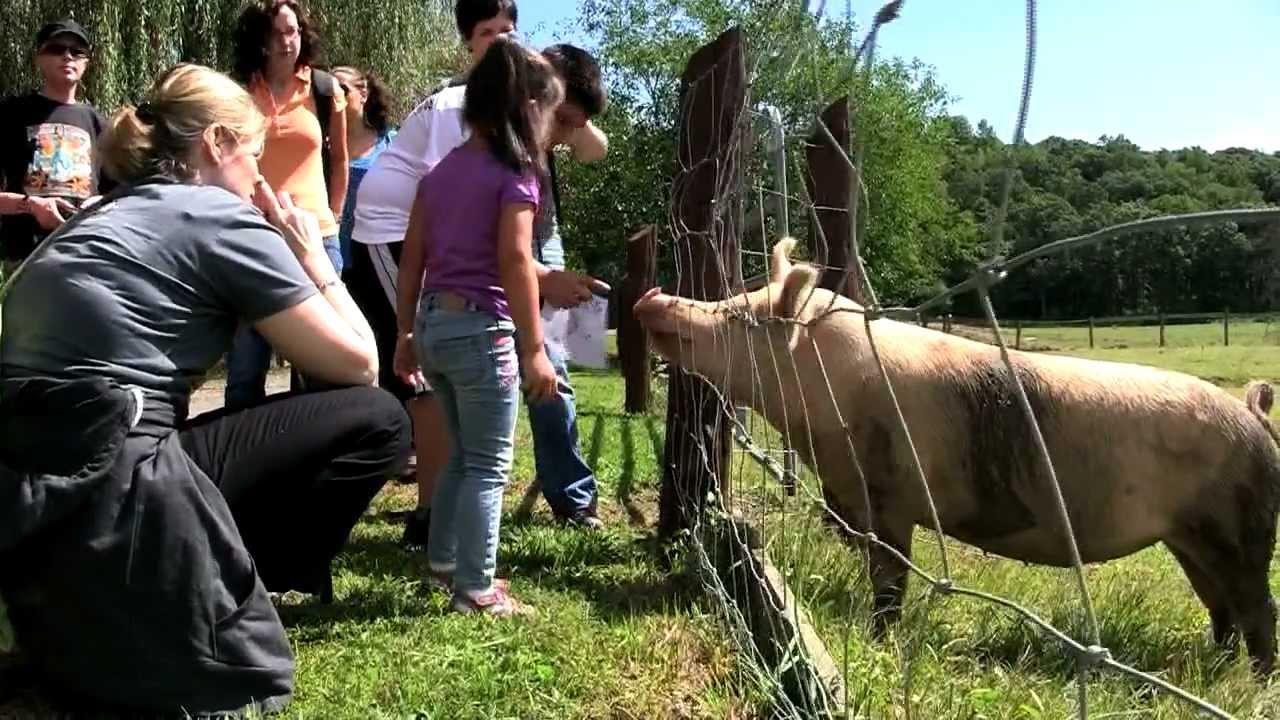 ASPCA Visits Catskill Animal Sanctuary